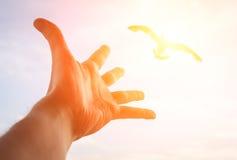 Hand reaching to bird. Stock Photo