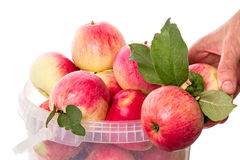Hand with red apples Stock Image