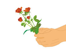 Hand and red flower on isolated white background stock photo