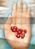 Hand with red juicy cranberries Royalty Free Stock Photo