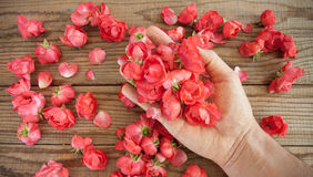 Hand among red roses Stock Image