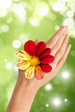 Hand with red and yellow flower Royalty Free Stock Photos