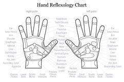 Hand reflexology chart description outline Royalty Free Stock Photo