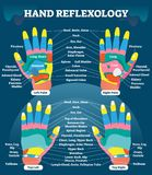 Hand reflexology massage therapy medical vector illustration chart. Human well being system. Inner organs and glands diagram. Acupuncture healing information vector illustration