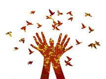 Hand release the birds. Royalty Free Stock Photography