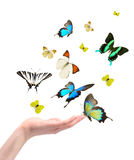 Hand releasing the buterflies Stock Images