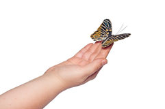 Hand releasing the butterfly Royalty Free Stock Image