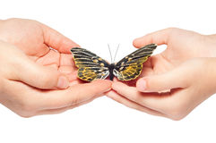 Hand releasing the butterfly Stock Photos