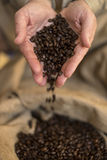 Hand releasing coffee beans Stock Image