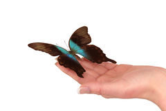 Hand releasing exotic butterfly Royalty Free Stock Photo