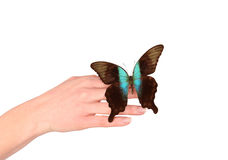 Hand releasing exotic butterfly Royalty Free Stock Photos