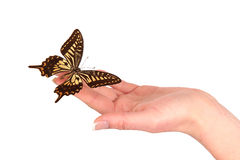 Hand releasing exotic butterfly Stock Photo