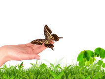 Hand releasing exotic butterfly Royalty Free Stock Photography