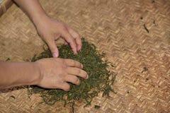 Hand-rollende theebladen Stock Foto