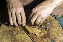 Hand rolling tobacco leaves for cigar production Stock Image