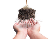 Hand and Root Plant with soi, concept safe earth Stock Photography