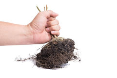 hand and Root Plant with soil Royalty Free Stock Photos