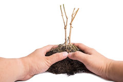 hand and Root Plant with soil Stock Photos