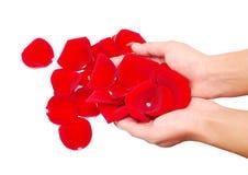 Hand and rose petals Stock Photos