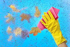 Hand in rubber glove cleaning window on a blue sky background Stock Photos