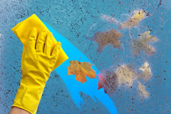 Hand in rubber glove cleaning window on a blue sky background Stock Photography