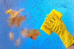 Hand in rubber glove cleaning window . Stock Image