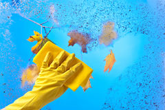 Hand in rubber glove cleaning window . Royalty Free Stock Photo