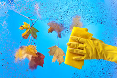 Hand in rubber glove cleaning window . Stock Photo