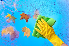 Hand in rubber glove cleaning window . Stock Images