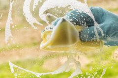 Hand in rubber glove washes a window. Concept- housework, house. Cleaning Stock Image