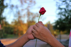 Hand`s of man is giving a red rose to a woman on special occasion on nature blurred background. Romantic lover dating or Valentin Stock Images