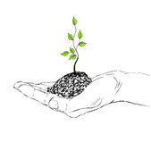 Hand and sapling Stock Photos