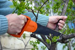 Hand saw on wood in male hands. royalty free stock photo