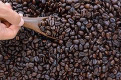 Hand scooping dark roasted coffee beans Stock Image