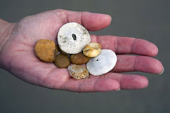 Hand with sea shells Stock Photography