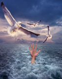 Hand and seagulls Royalty Free Stock Photography