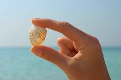 Hand and seashell Royalty Free Stock Image