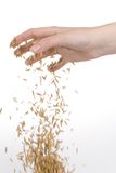 Hand seeding oats. On white background Royalty Free Stock Photography