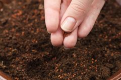 Hand seedling Stock Images