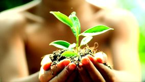 Hand and Seedling stock footage