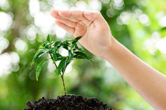 Hand and seedling Royalty Free Stock Images