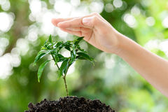 Hand and seedling. Little child hand protecting small seedling that growing from black soil. Earthday concept Royalty Free Stock Image