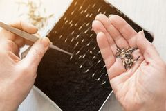 Hand with seeds planting, seeding plants and flowers stock photo
