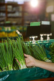 Hand selecting a bunch of fresh scallions in organic section Royalty Free Stock Photo