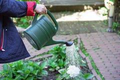 An elderly woman is watering flowers in her garden stock image