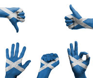Hand set with the flag of Scotland. A set of hands with different gestures wrapped in the flag of Scotland royalty free stock photos