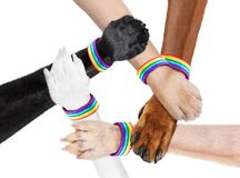 Hand shaking dog animal paws