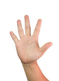Hand showing five fingers Stock Photography