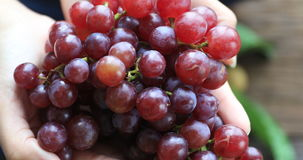 Hand shows a heap of red grapes harvested by herself in a red grapes vineyard. organic food and fine wine handmade stock video footage