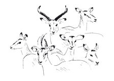 Hand sketch antelope. Vector illustration Royalty Free Stock Photo